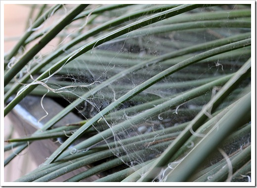 110915_spiderwebs_17