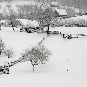 white silence by Nicu Hoandra - Landscapes Mountains & Hills ( field, hills, winter, tree, snow )