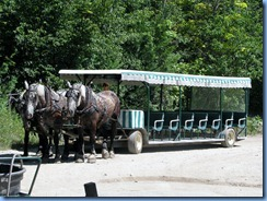 3337 Michigan Mackinac Island - Carriage Tours - three-horse hitch carriage behind Surrey Hills Carriage Museum