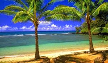 palm tree in hawaii images