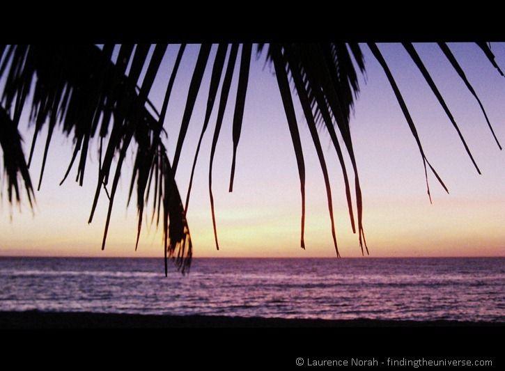 Palm tree fronds sunset beach sea