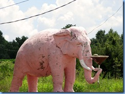 9914 Cross Plains, Tennessee - Pink Elephant with Martini Glass