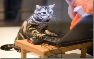 cats-laptops-funny-300x187