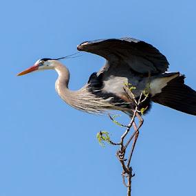 by Paul Brown Jr. - Animals Birds