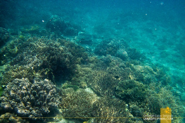 Coral Garded at Malapascua Island Hopping and Snorkeling