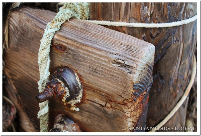 beach wood (1024x683)