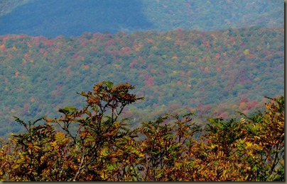 trail to Craggy Gardens overlook