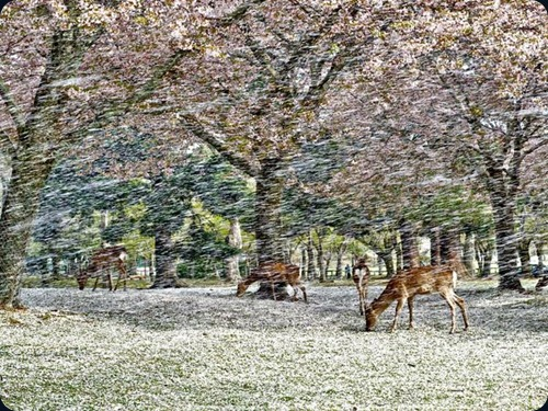 deer-blossoms-japan