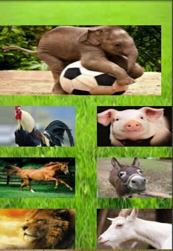 Animal Sounds Free Game Kids
