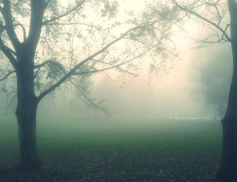due alberi nebbia