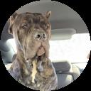 shannon winchester Google profile image