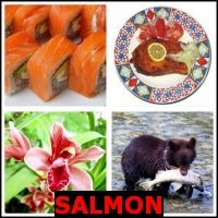 SALMON- Whats The Word Answers