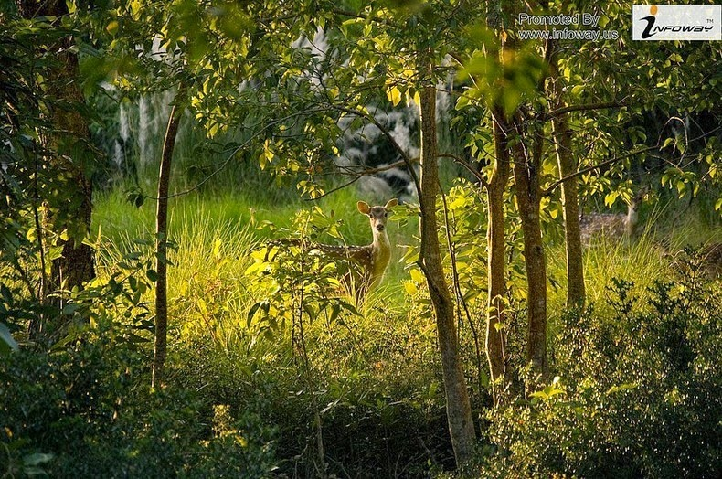 sundarbans-national-park-2