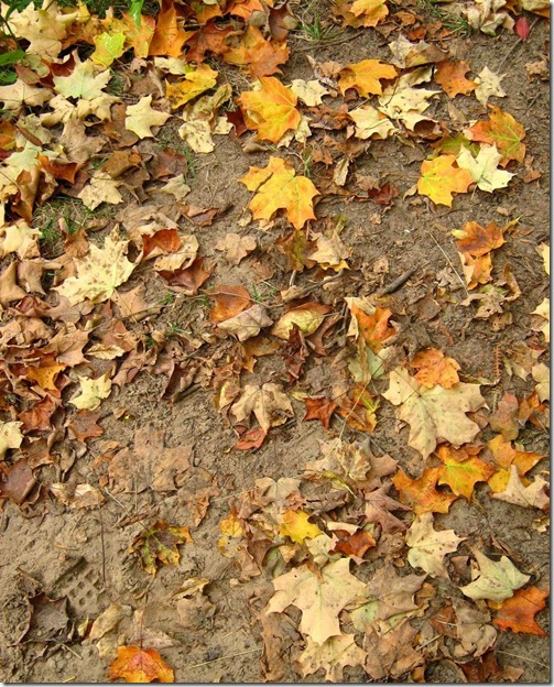 Leaves_and_Sand_Texture_1_by_Jenna_RoseStock