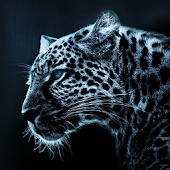 Leopard Atom Theme
