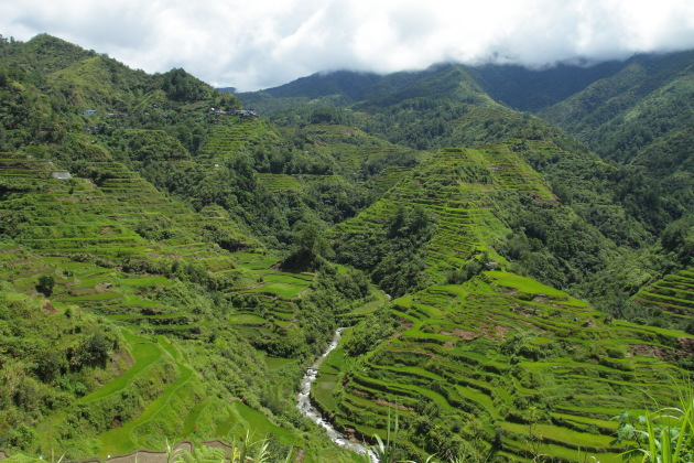 Lush green Banaue Rice Terraces covered by monsoon clouds