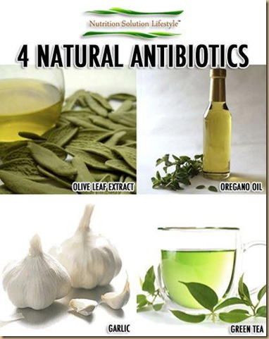 4 natural antibiotics