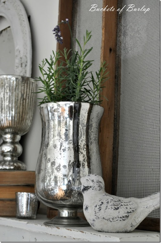 mantle-lavender 2
