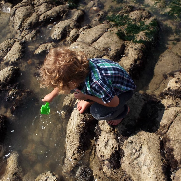 exploring rock pools