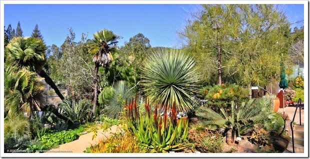 Succulents and More: Aloes in bloom at the University of California ...