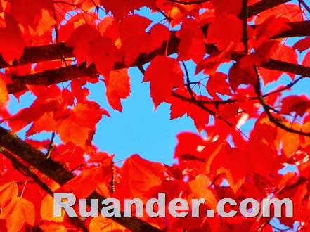 Fall Color 4 Ruander