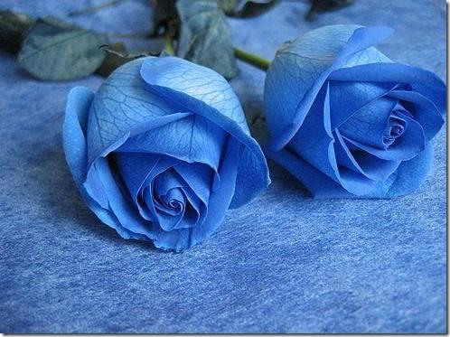 flor día del amor (19)