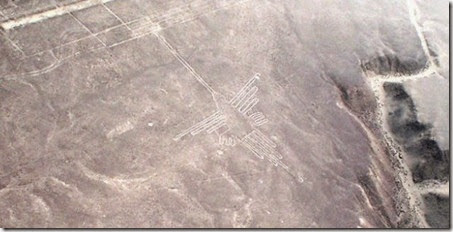 news-nazca-bird-3