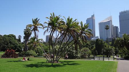 Atractii Australia: Gradina Botanica Sydney