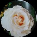 Immagine del profilo di Rossana Michelotti