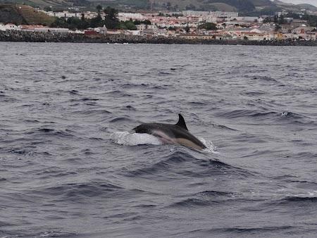 07. Delfin care sare.JPG