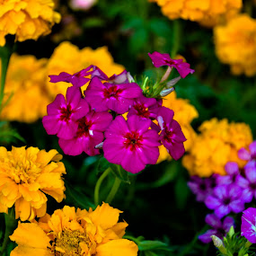 Colourful by Padmanaban Ebbas - Flowers Flower Gardens ( colourful, flowers )