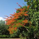 Тайланд 18.05.2012 5-17-07.JPG