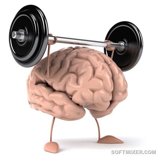 brain05