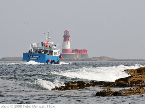 'Farne Island workhorse' photo (c) 2008, Peter Mulligan - license: http://creativecommons.org/licenses/by/2.0/