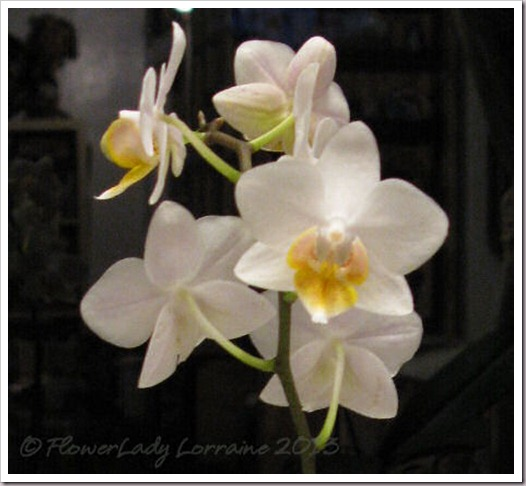 02-24-f-p-orchid