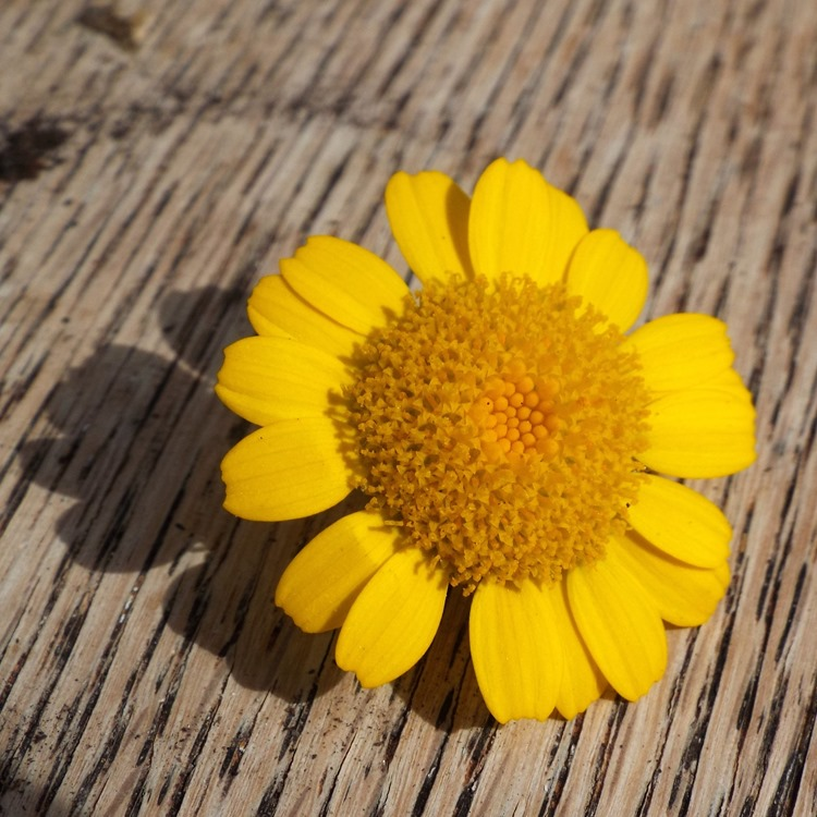 wild flower on wood