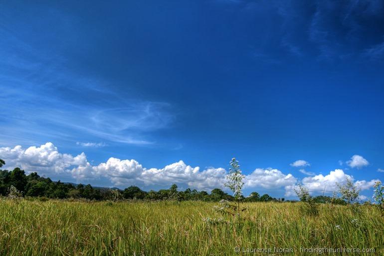 Grassy plains Khao Yai national park