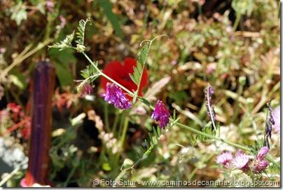 5939 Artenara-Fontanales(Chicharilla india)