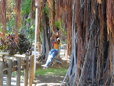 Micul Tarzan din Mauritius