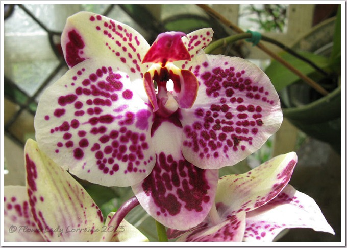 03-14-unkn-bday-orchid3