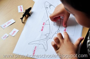 Shark Unit Activity
