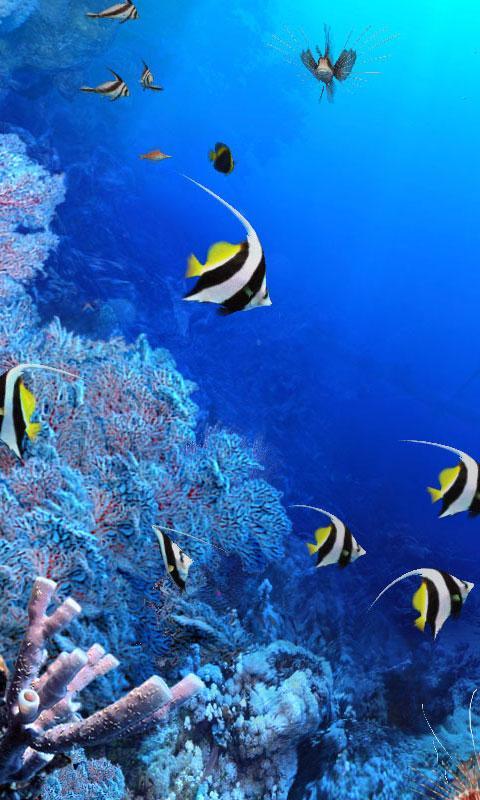 Make Your Own Aquarium