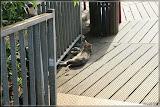 Katze in der Sonne