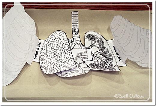 respiratorysystemvest2