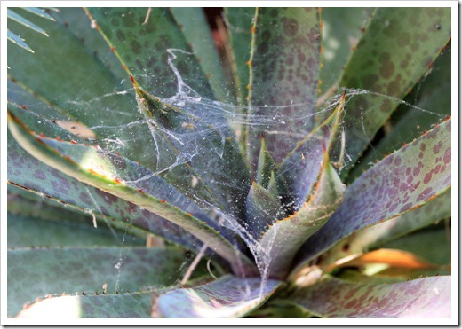 130523_plants-with-cobwebs_01