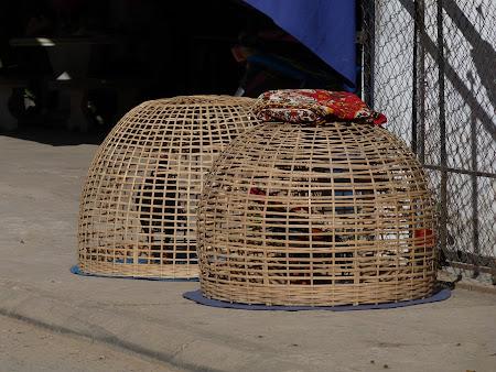 Cocosi pregatiti sa se bata in Laos