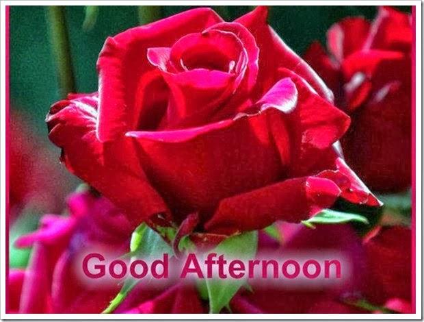 Imagens De Boa Tarde: Imagens Para Facebook Whatsapp Google Plus Twitter E