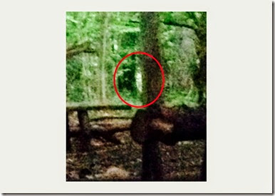 Lola Swan's mobile phone photo at Leigh woods, Bristol, where Lola Swan is convinced shows an image of a ghost.  See swns story SWBLAIR - It has all the making of a horror film for two women who ran home from a night camping – after photographing a ghost. The two women, who had set up their tent earlier that day in a woodland, felt they were being watched, heard noises in the night and had their stuff mysteriously disappear. Snapping pictures of the fright, it wasn't till the morning that Lola Swan, 28, checked through her photos to see what appears to be a white ghoul, or ghost, peering at them from behind a tree.Lola had been hoping to camp the night in Leigh Woods, Bristol, with her friend, Kate Channon, 24, but things began to get spooky. Throughout the evening, Lola believes something was watching the pair, and when Kate whistled out, someone or something, whistled back. Even though the pair, both from Bristol, were alone for miles around, they heard branches and twigs snapping, and their hammer went missing. When they heard the sound of a little girl's voice , they panicked, packed up their tent and left around 1am.. 14 May 2014