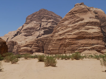 Vegetatie in Wadi Rum