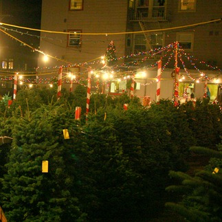 Christmas Tree Lots San Francisco